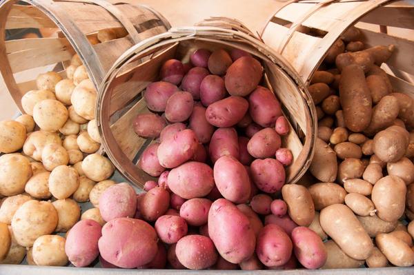 Перед хранением картофель нужно рассортировать; фото с сайта neskaties.lv