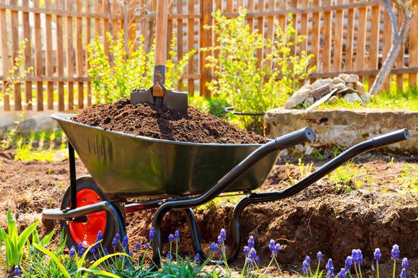 Редкий огородник не использует компост