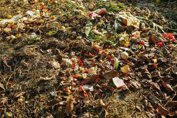 Обычно в компост закладывают органические отходы