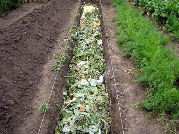 Делаем грядку из растительных остатков. Фото с сайта homius.ru