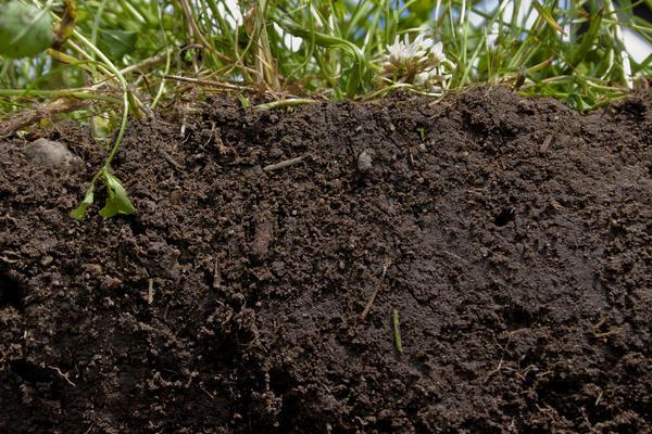 Гуматы принесут пользу и почве, и растениям. Фото с сайта s4.thingpic.com
