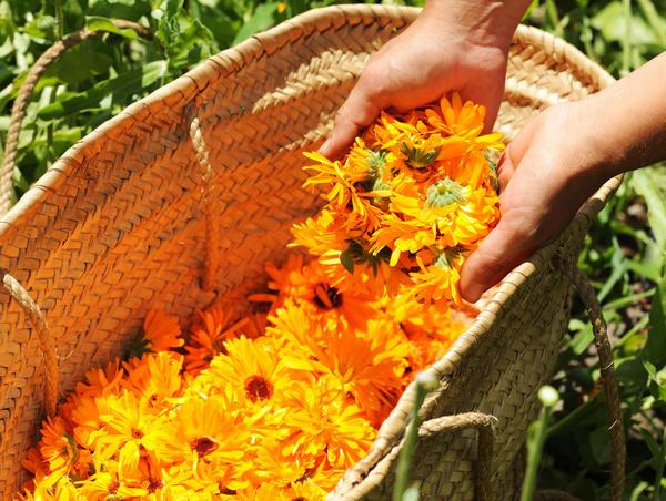 Садовые растения помогут сделать волосы здоровыми и красивыми