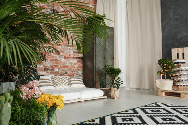Самые популярные комнатные растения для гостиной