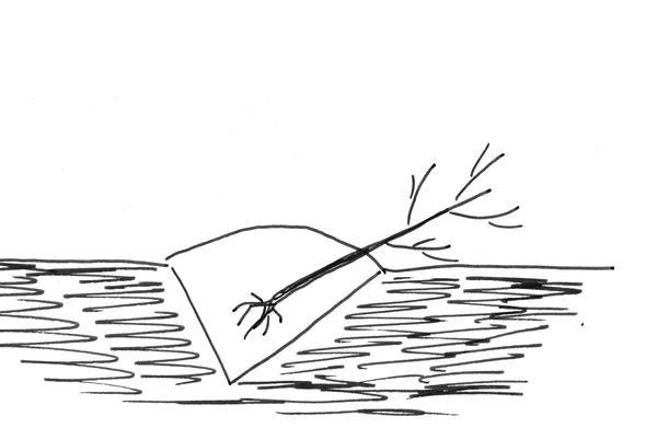 Схема прикопки саженцев, фото автора
