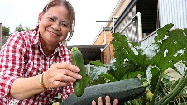 Людям солидного возраста без кабачка никак нельзя. Фото с сайта cdn.newsapi.com.au