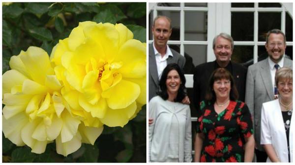 Роза сорт Friesia, созданный Кордес в 1977 г, 4 поколение Кордес, фото сайта newflora.com