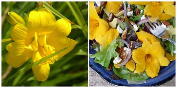 Вот такие цветки, как у лилейника гибридного Yellow Bouquet, также используют в блюдах, фото автора. Салат с лилейником. Фото с сайта listofbest.ru