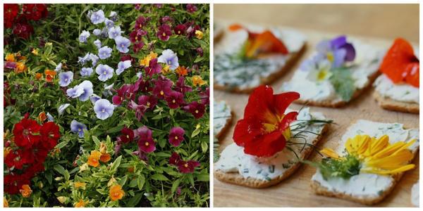 Цветки фиалки Виттрока, фото автора. Бутерброды с цветками. Фото с сайта bolshoyvopros.ru