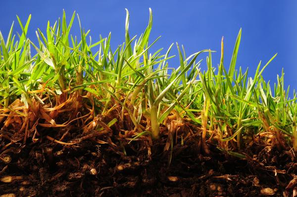 Каждый огородник хочет знать: что такое гумус?