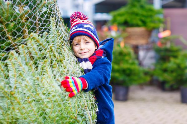Новогоднюю елку можно оставить в живых!