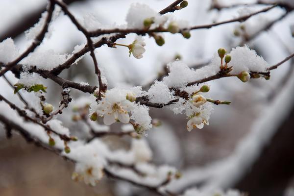 Возвратные заморозки бывают разные. Фото с сайта michael.net.ru
