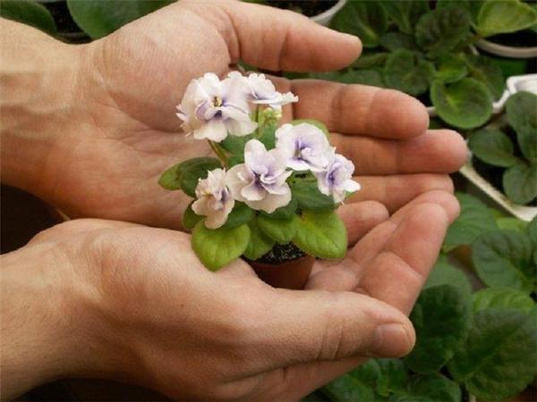 Подкармливать домашние цветы следует гораздо чаще, чем нам порою кажется. Фото с сайта floralgid.pp.ua