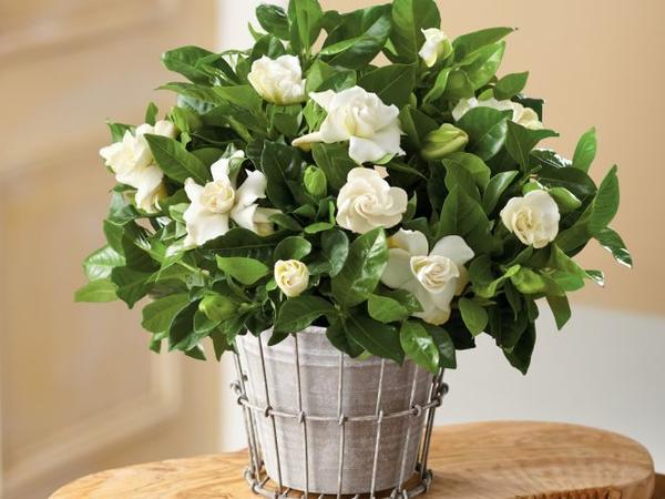 Натуральных удобрений для комнатных растений много, можно подобрать подходящие для каждого вида. Фото с сайта womanadvice.ru