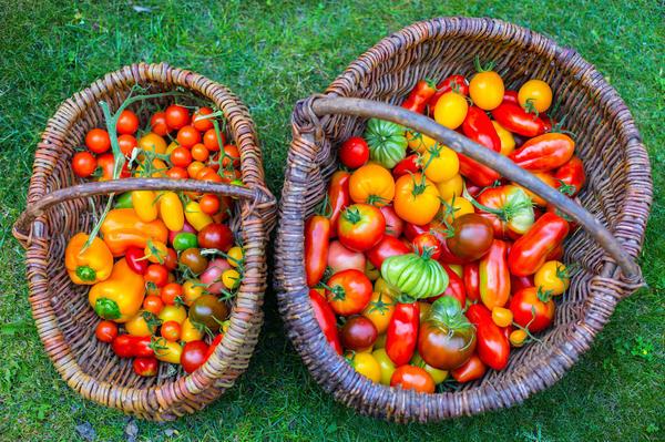 Если семена качественные - богатый урожай обеспечен