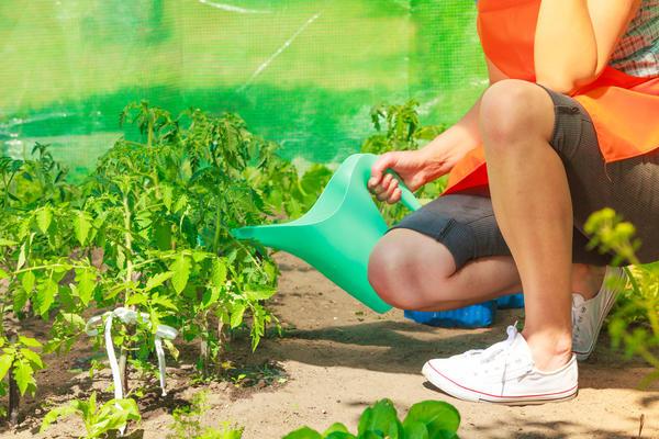 Агротехника однозначно может повлиять на вкус плодов