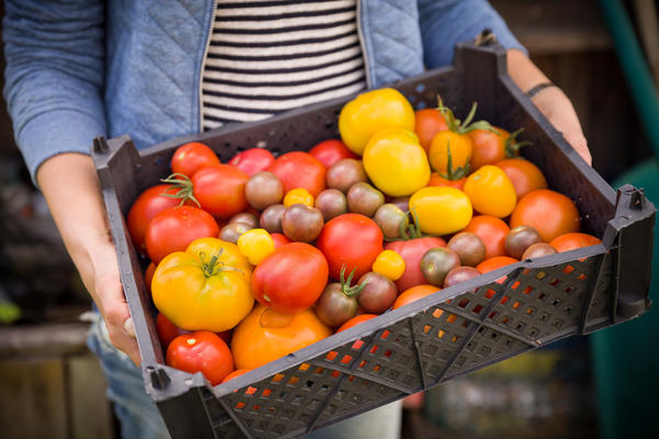 О вкусе томатов отчасти можно судить по окраске плодов