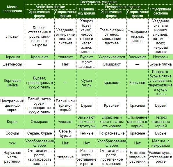 Таблица сравнения болезней увядания земляники. Фото с сайта asprus.ru