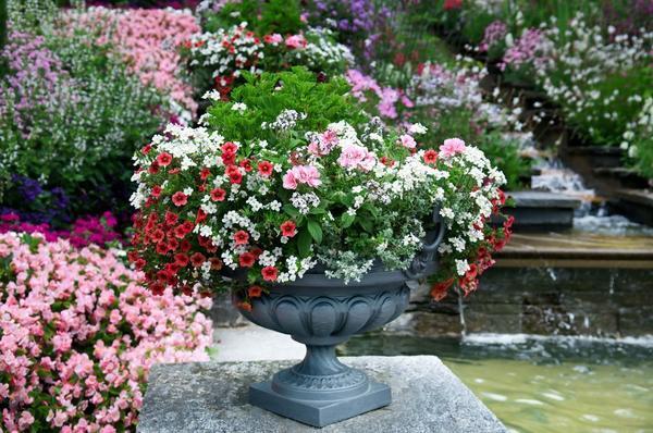 В саду всегда нужно стремиться использовать гармоничные цветовые сочетания. Фото с сайта img.superdom.ua