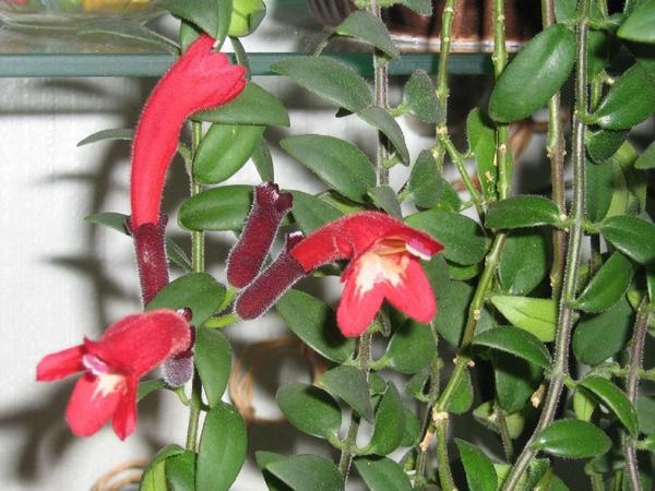 Цветки крупным планом, фото с сайта zakupator.com