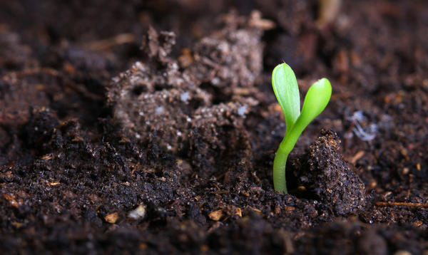 Правильный грунт может дать растению все необходимое и защитить от того, что ему вредит