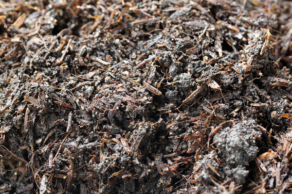 Грунт с избытком солей или с повышенной кислотностью для выращивания рассады непригоден
