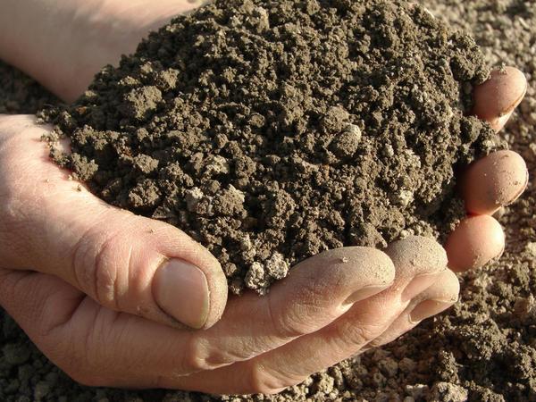 Обычный грунт можно превратить в идеальную почву для рассады
