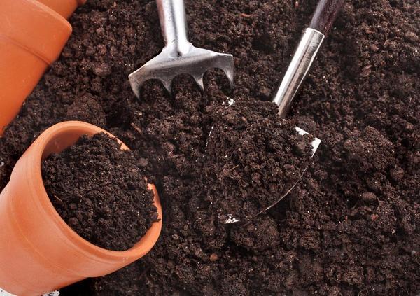 У покупного грунта могут быть те же проблемы, что и у огородного. Фото с сайта strawberrycorner.co.uk