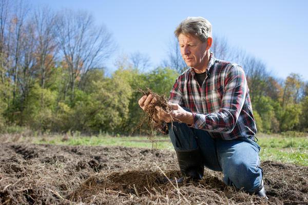 Насколько плодородна наша почва?