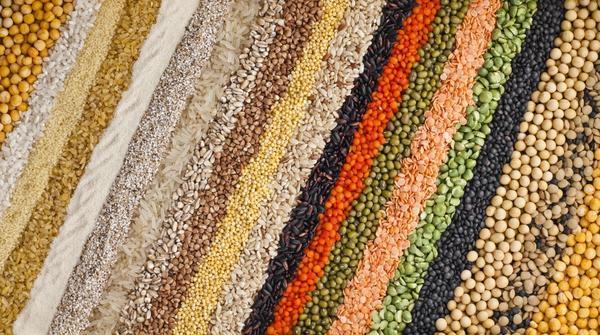 Палитра семян