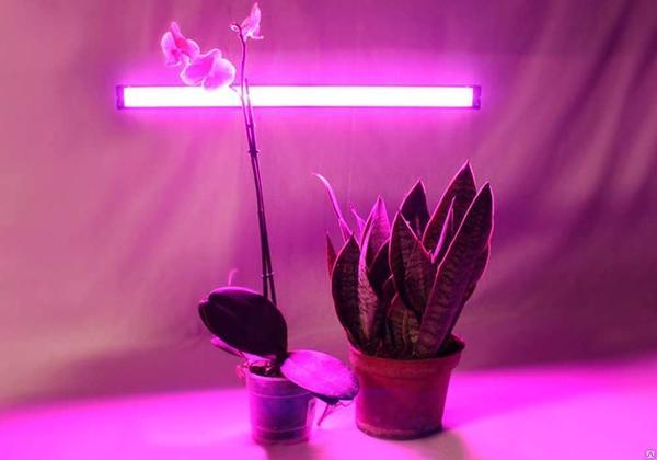 Ультратонкий светодиодный светильник для растений Фито фото сайта st26.stpulscen.ru