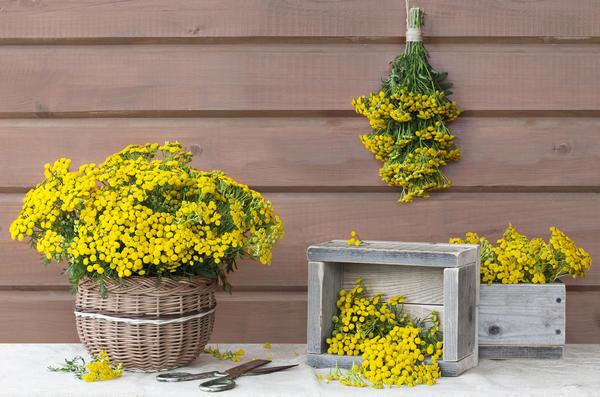 Инсектицидные растения - помощники дачников