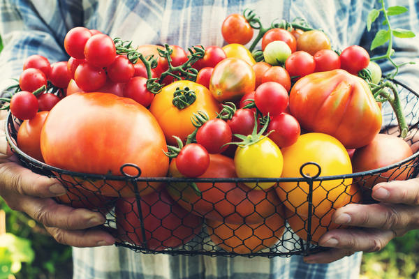 Какой томат самый вкусный