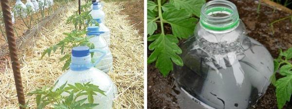 Использование пластиковых бутылок для полива. Фото с сайта ru.pinterest.com