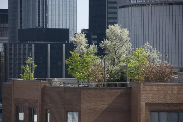 Новая волна озеленения в городах