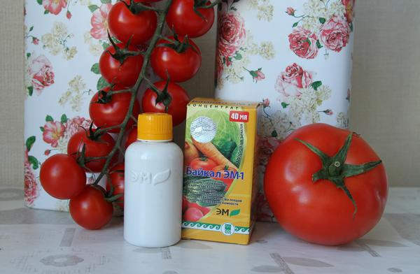 Байкал ЭМ-1 для защиты томатов от фитофтороза
