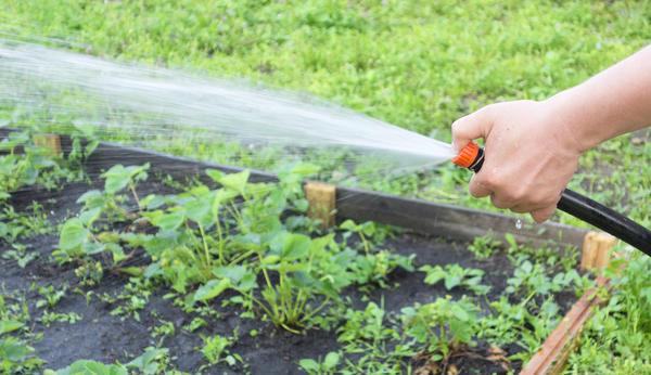Обмороженные пальцы от ледяной воды – на такие жертвы идут дачники, чтобы полить свой сад