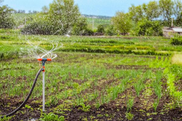 Дождеватели и разбрызгиватели избавят огородника от рутинной работы