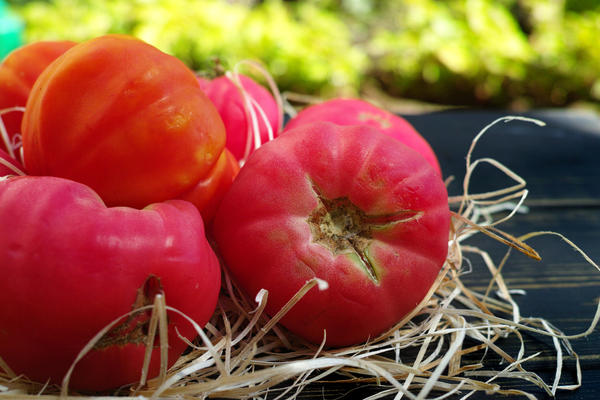 Лучшие сорта и гибриды томатов с розовыми и малиновыми плодами
