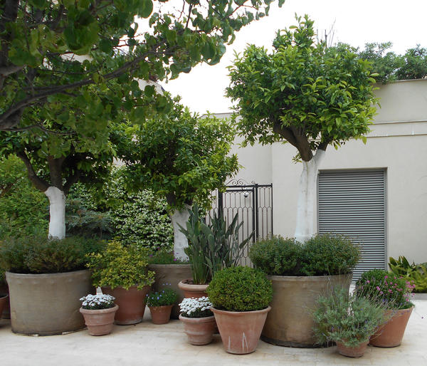 В сад на крыше можно высаживать деревья-крупномеры