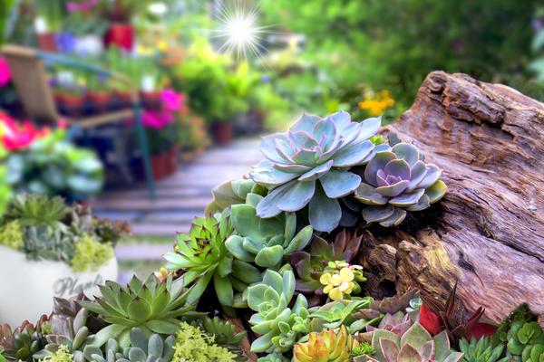 Выбираем растения для сада на крыше