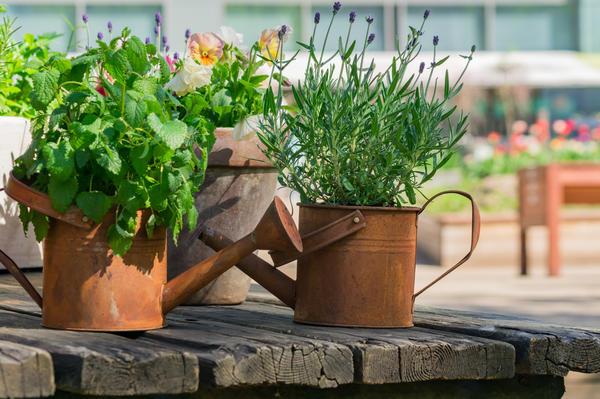 Правильно подобранные емкости и растения удачно вписываются и достойно дополняют стили интерьеров