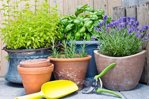 Кухонный садик - современный элемент оформления дачи, дома, квартиры