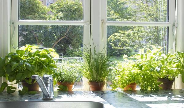 Кухонный садик из пряных трав - красиво, модно, полезно! Фото с сайта balcony.ucoz.com