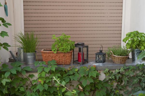 Весной емкости со шнитт-луком можно вынести на террасу