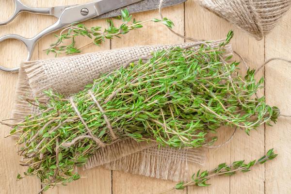 Урожай зелени чабреца