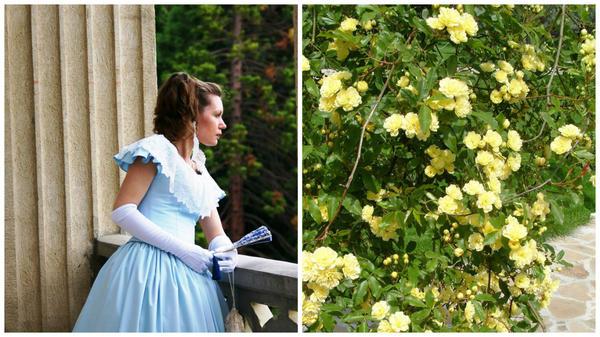Розовый вальс на балу и старинная вечнозеленая роза
