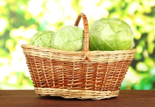 Капуста для квашения, салатов и маринования готова!