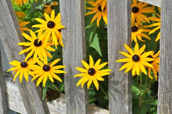 Название для букета осенних цветов на украинском языке — img 11