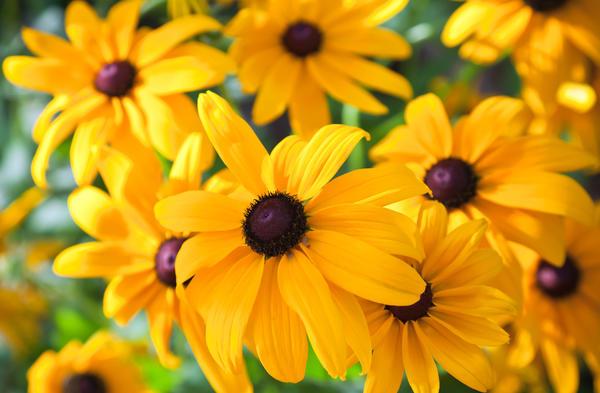 Цветы сентября трогательны и щемяще красивы