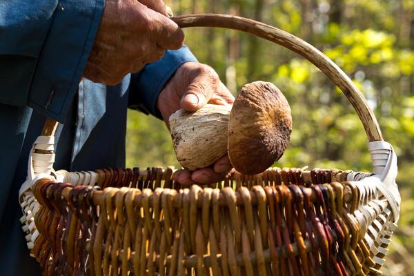 Сбор грибов - дело полезное и увлекательное, но и об осторожности не забывайте!